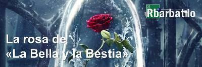 La rosa de «La Bella y la Bestia»