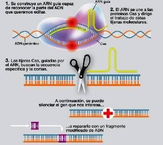 Crean un modelo experimental del sarcoma de Ewing usando CRISPR | ¿De que hablamos ahora?