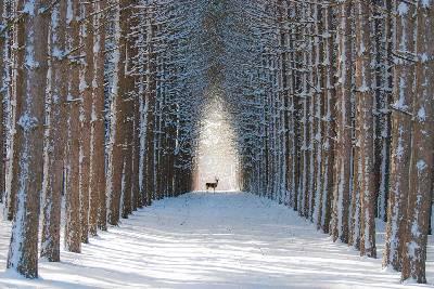 Las 12 selvas más hermosas del mundo
