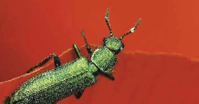 Un mundo de escarabajos