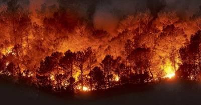 Efectos de los incendios forestales