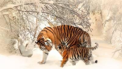 80 Frases Animalistas Cortas y Contra el Maltrato Animal - Frases Épicas