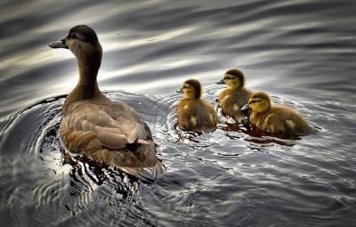 Familia numerosa, tercer hijo ¿sí o no?
