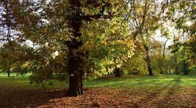 Parques Reales de Londres: Hyde Park, Greenwich Park… (Guía 2019)