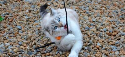 El trastorno pica en los gatos | Todo para tu gato