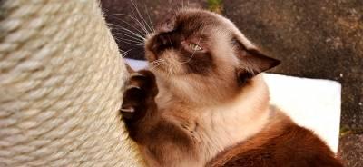 Rascadores para gatos | Todo para tu gato.