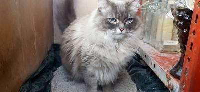 La Arena para gatos | Todo para tu gato