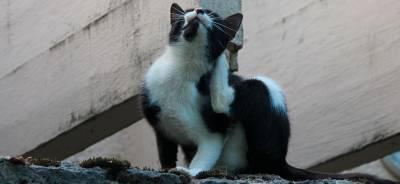 Las alergias en los gatos | Todo para tu gato