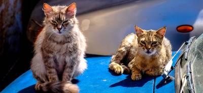 Golpes de calor en los gatos | Todo para tu Gato