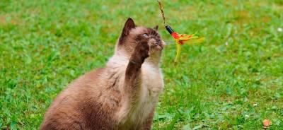 Juguetes para gatos | Todo para tu gato.