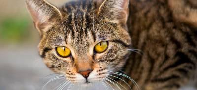 ¿Por qué mi gato no usa el arenero? | Todo para tu gato