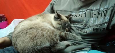 ¿Pueden los gatos detectar enfermedades? | Todo para tu gato