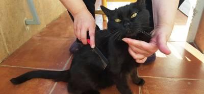 Cepillos para gatos | Todo para tu Gato