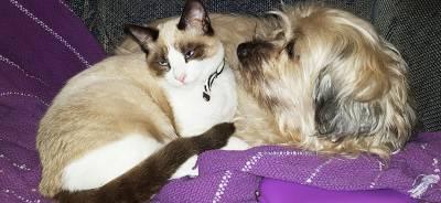 La relación entre perros y gatos | Todo para tu Gato