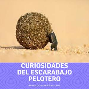 El escarabajo pelotero, ¿Por qué mierda y no petalos de flores? | Bajandoalatierra. com