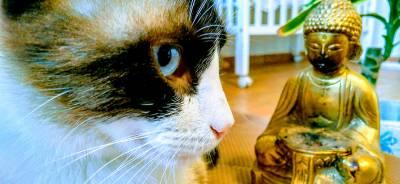 El misticismo de los gatos | Todo para tu Gato.
