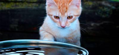 ¿Por qué a los gatos no les gusta el agua? | Todo para tu Gato