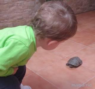 Importancia de los Animales para los Niños, ¡tenemos nueva mascota!