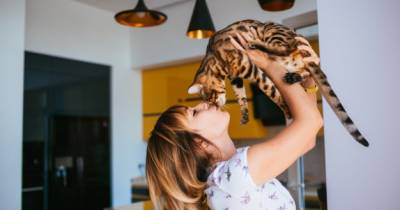 Los cat cafés: Una propuesta animalista o un simple cliché