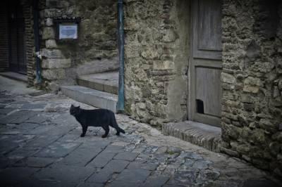 El gato perdido