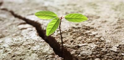 Resiliencia - Aplicarla y llevarla a ser parte de tu equipo
