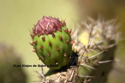 Pinya de Rosa Jardín Botánico Tropical