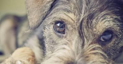 Acorde con la vida: 'Quién tiene un perro tiene un tesoro'