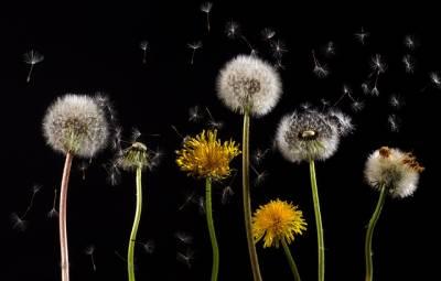 Alergias: la Junta de Andalucía informa sobre los niveles de polen a través de una app