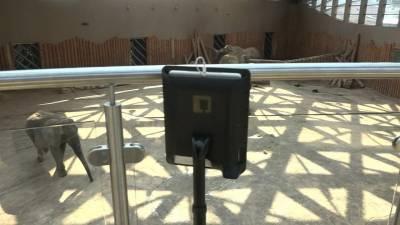 LEOS: Un Robot que ayuda a niños hospitalizados a visitar el Zoológico