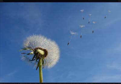 Con las alas del viento