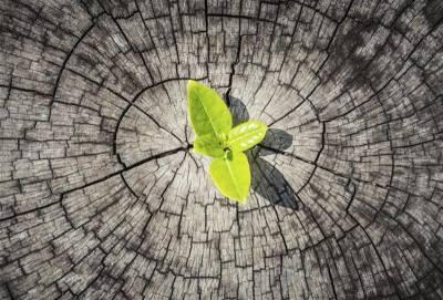 Resiliencia y Esperanza