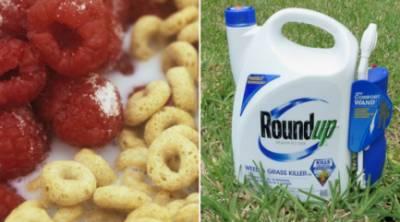 Descubren el glifosato sospechado de causar cáncer en 21 cereales del desayuno de niños