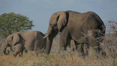 Safari por libre en el Parque Nacional de Etosha, Namibia