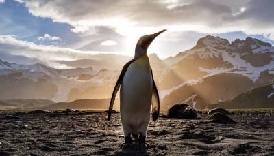 ¿Qué es Google Penguin? Aprende a salir de una penalización