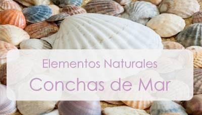 Ideas para hacer con conchas de mar | Mamá y 1000 cosas más