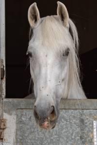 Miércoles mudo: El caballo