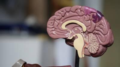 5 Hábitos Para Mejorar La Salud De Tu Cerebro A Partir De Los 50