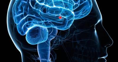 Amígdala: La Fuente de la que Emanan nuestras Emociones