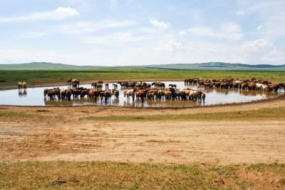 Viajar a Mongolia, todos los consejos que necesitas
