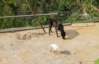 Historia De Animalitos: Los Patoperros