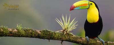 Guia de Costa Rica para Principiantes