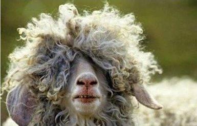 Cuidado del cabello, consejos para lucir pelazo
