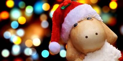 Relato: Una oveja en Navidad (Terror Navideño)