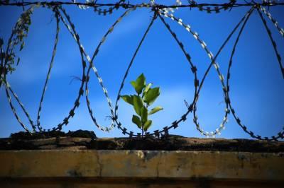 La Libertad Condicional: ¿Es realmente eficaz en nuestro Código Penal?