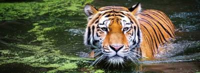 Safari para ver tigres en India: preparativos de una aventura soñada