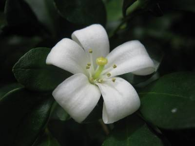 Pobre flor donde naciste...