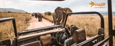7 Consejos para un Safari por África épico