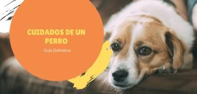 Guía de Cuidados de un Perro