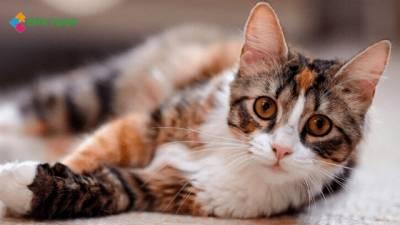 7 cosas que no sabias de los gatos - Esta Tuani