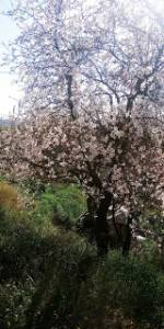 El Rincón de Keren : Relato : Árbol sagrado